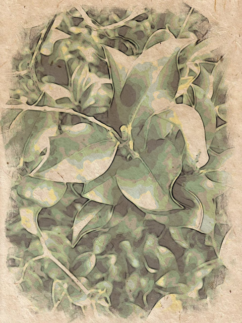 Leaves old looking artistic free photo, download online now