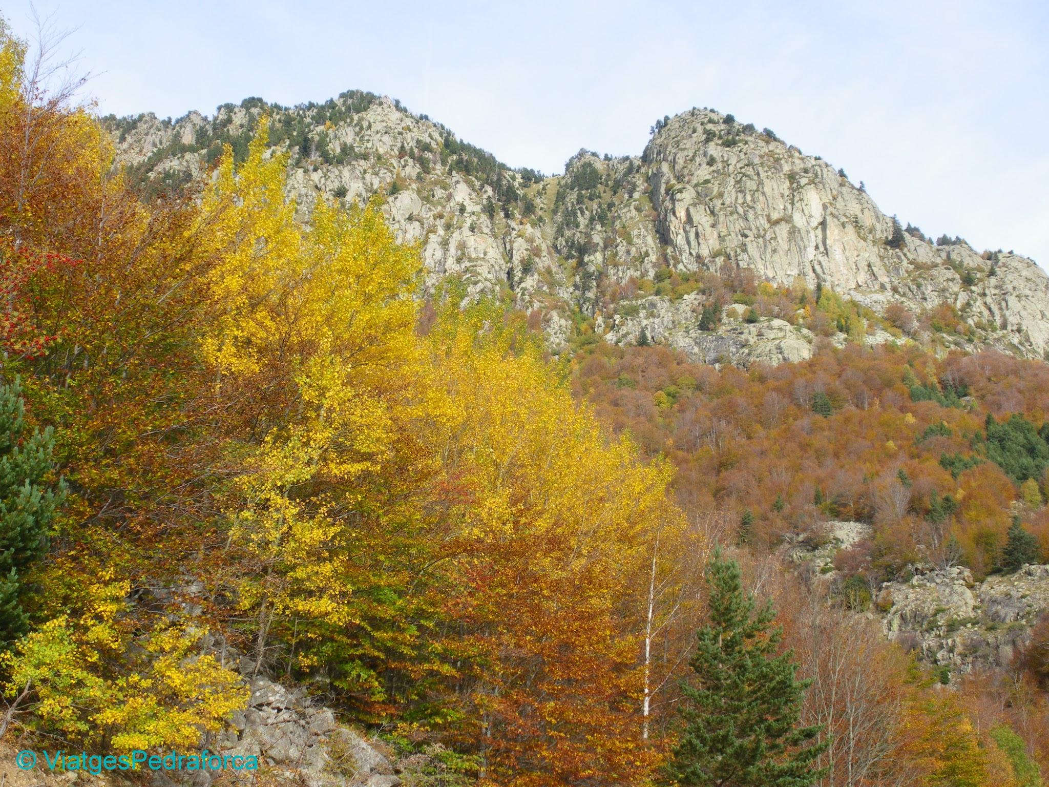 Pirineu d'Osca, Parc natural Posets-Maladeta, colors de tardor, fagedes