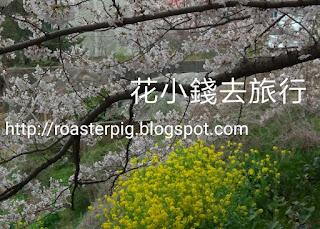 迎月路櫻花