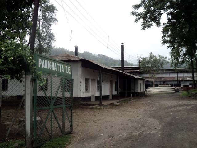 Panighatta tea estate factory