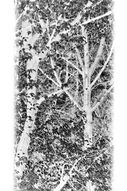 Jesienny widok z okna. Ruda Śląska. Abstrakcja. Krajobraz. Fotgrafia odklejona. fot. Łukasz Cyrus