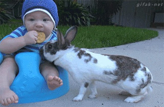 Clever Rabbit, playing with baby