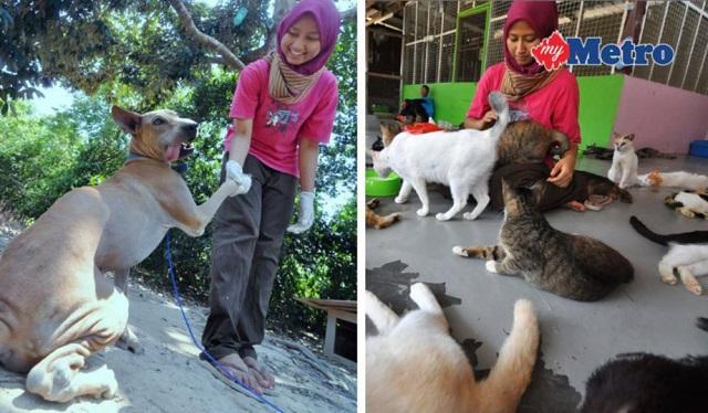 Penyelamat Kucing, Anjing Terbiar Terima Banyak Tentangan