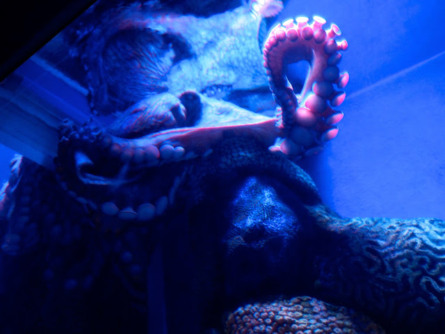 Octopus in the Grand Aquarium, Ocean Park, Hong Kong
