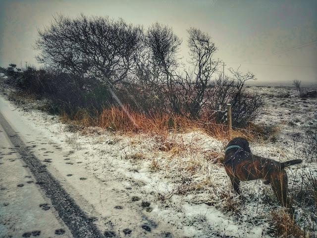 snowy Connemara landscape, road, boxer dog