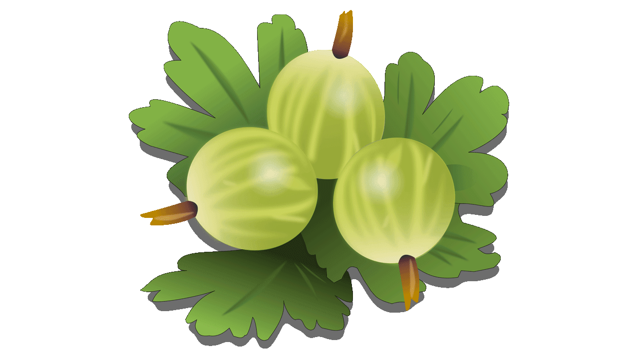 Downloads 7 Gooseberry Fruit Royalty Free Clipart Fruit