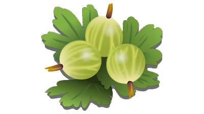 gooseberry clipart free