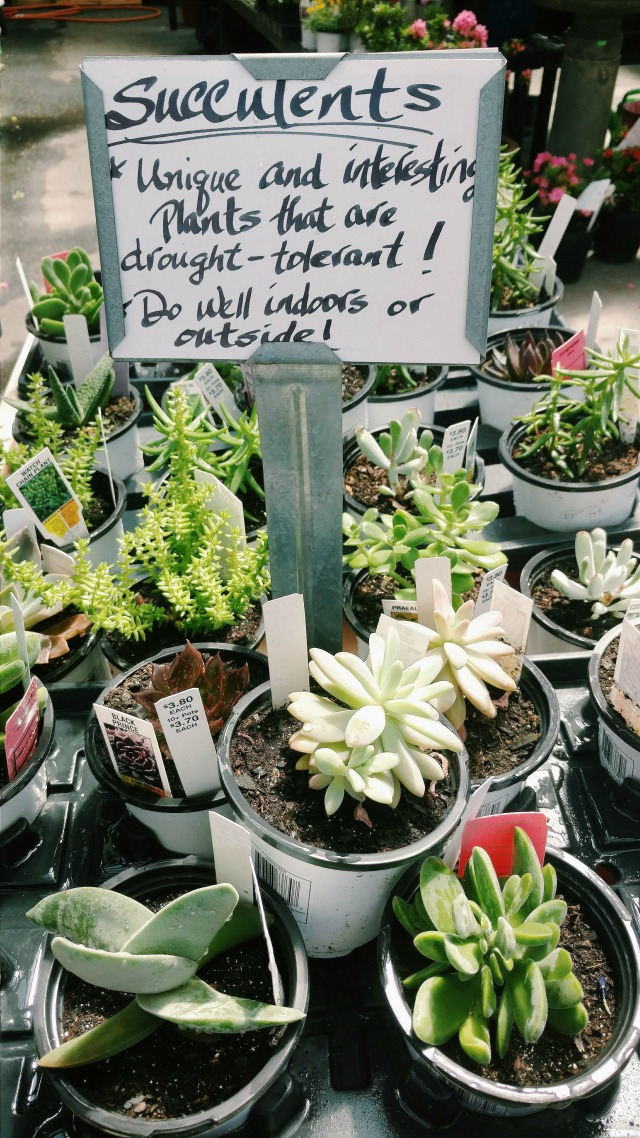 Sign describing that succulents are easy to care for, surrounded by succulents.