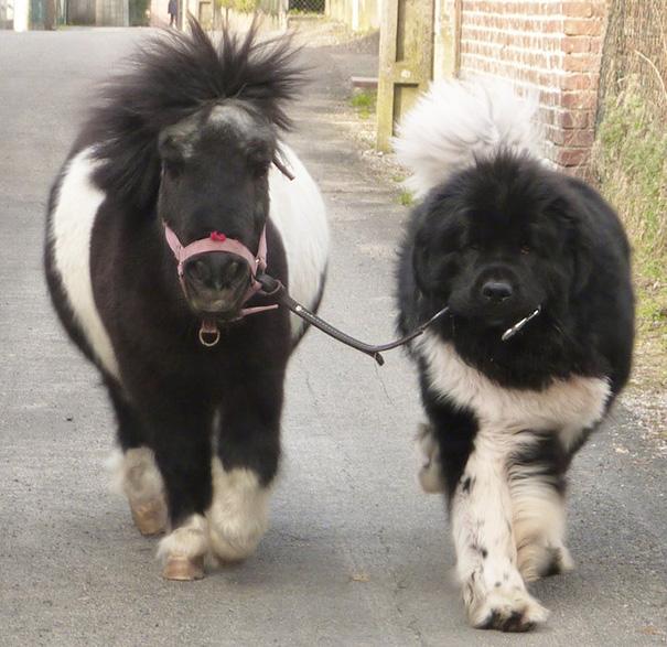 Tiny Horse Or Giant Dog