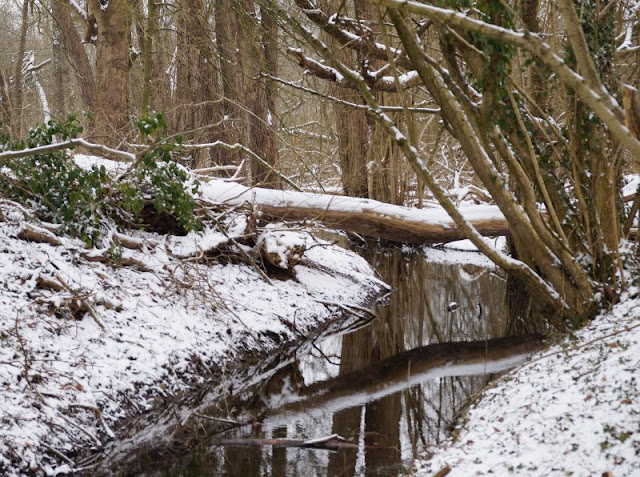 Rund um den Tröndelsee: Unser Winter-Spaziergang mit Schlitten. Kleine Bachläufe am Tröndelsee in Kiel sind auch für die Kinder toll!