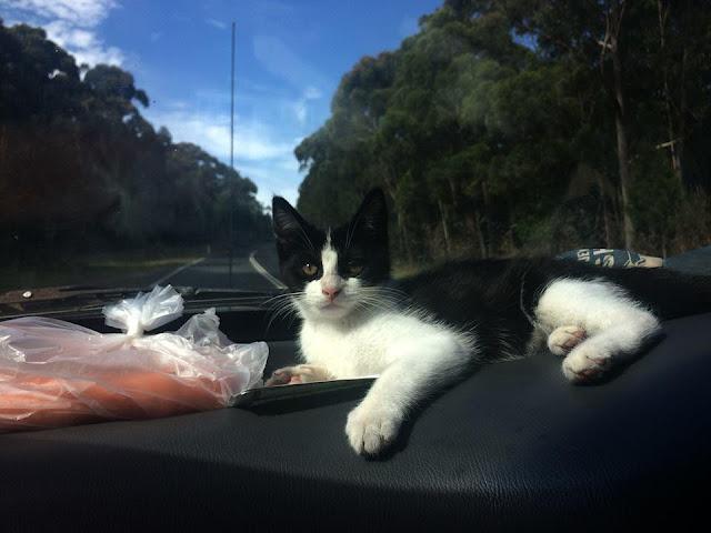 Vợ bị cho ra rìa vì chồng quá thân với mèo
