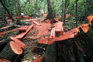Penjarahan dan Penebangan Hutan