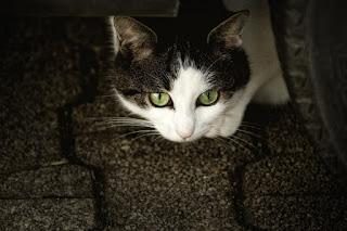 asal-usul-nama-kucing