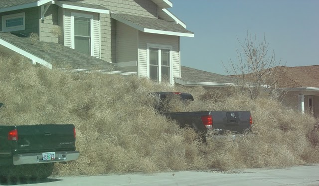 #US.#Chronicles : Invasion of tumbleweeds in Southern California due to heavy winds !