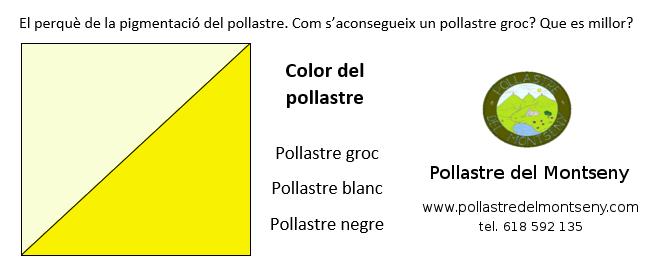 pollastre groc - pollastre blanc