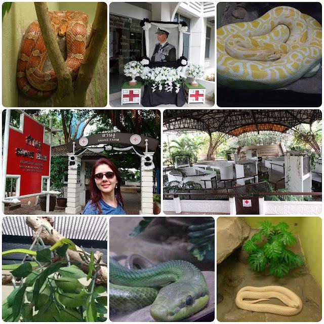 Cobras na Snake Farm, em Bangkok.