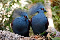 Jenis-Jenis Burung Puyuh Yang Memiliki Keunikan Luar Biasa