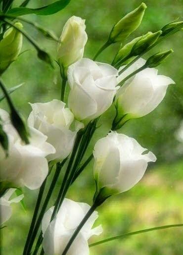 Nikmat Kedamaian Yang Hakiki - kedamaian di hati
