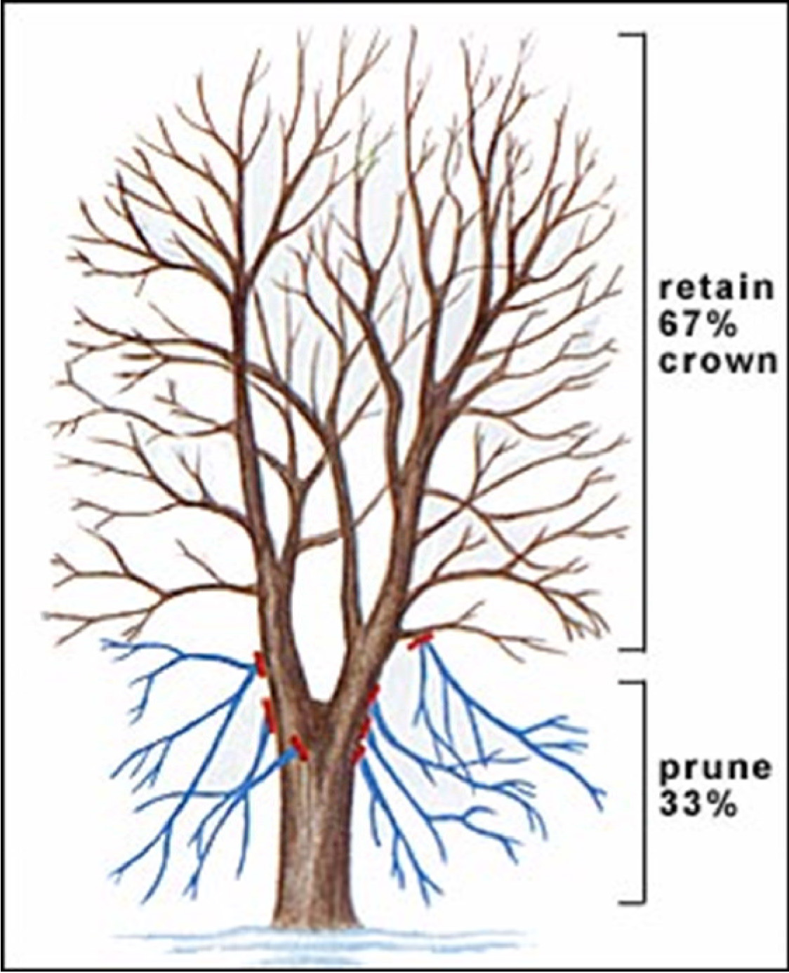 shelter blog tree limbing