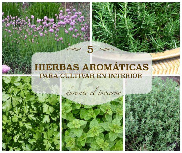 Abono Liquido Para Plantas Verdes - Vitaminas Para Plantas De ...