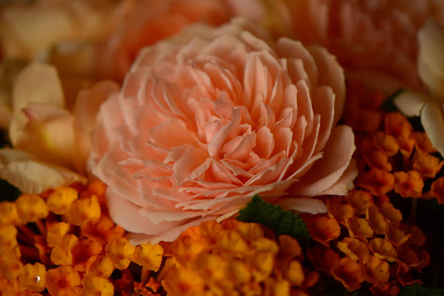 Monday vase meme, rose, Crown Princess Margareta, david austin rose, lantana, amy myers photography, small sunny garden, desert garden