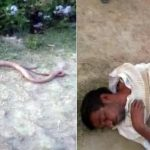 A farmer in northern India reportedly chewed off a snake's head in revenge after the reptile bit him, with his attending doctors saying they had never come across such a bizarre case, a local media reported on Wednesday.
