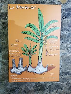 musée-banane-martinique