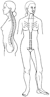 Anatomy of the Sinew Channels: The Diaphragm and the