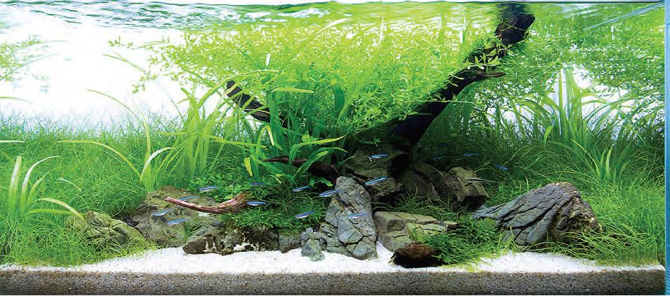 Aquascape bisa hilangkan stress ikan hias cupang - Gambar aquascape ...