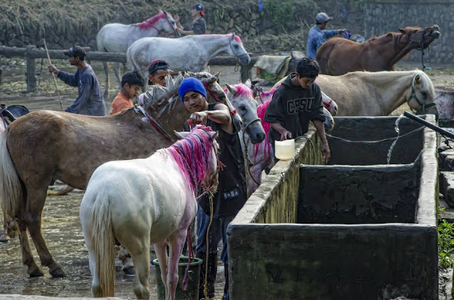 Horse stable boys/caretakers bathing their horses.