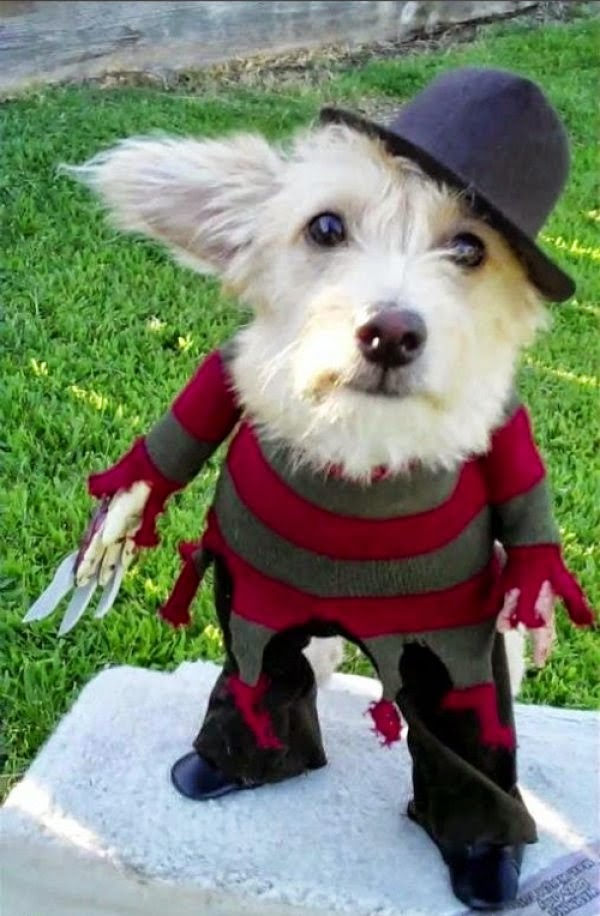 Halloween dog costumes? Why Not? | LoL Picture Collection