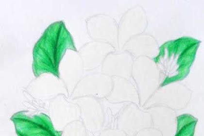 Mewarnai Gambar Bunga Kamboja