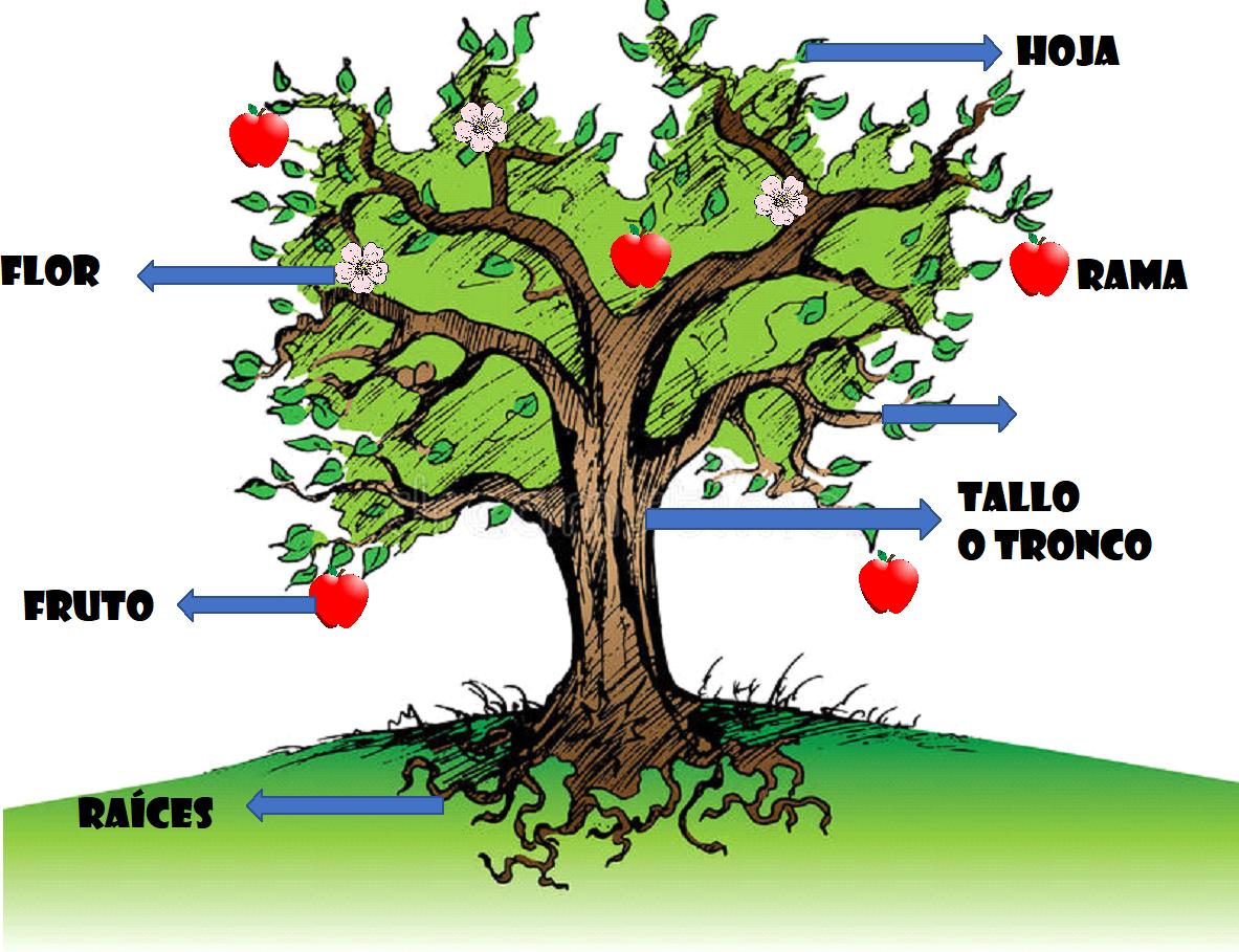 Ciencias naturales las partes de una planta for Imagenes de las partes del arbol