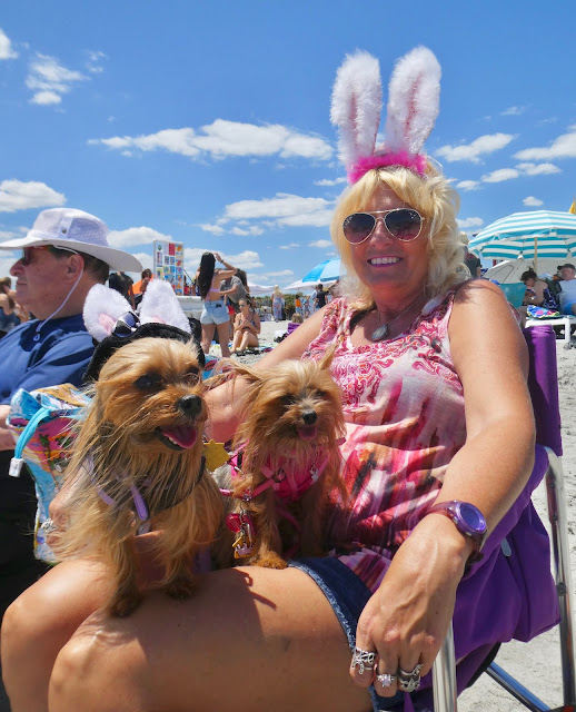 easter at cocoa beach florida; dog surf chamionship watchers