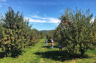 Apple Picking and Autumn Picnic