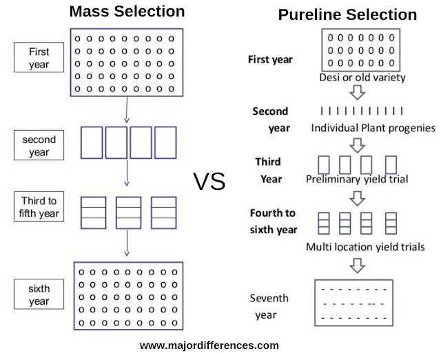 Mass selection vs Pureline Selection