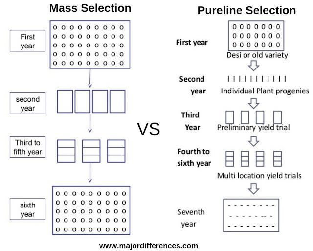 Mass selection vs Pureline Selection