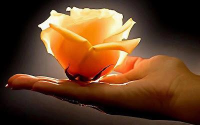 Resultado de imagem para flor na mão de homem