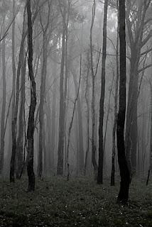 Greendale Landscape in Fog