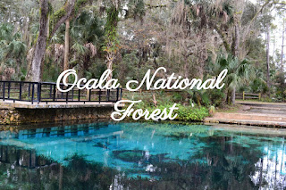 bassin d'ocala national forest