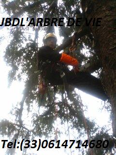 JBD L'Arbre de vie
