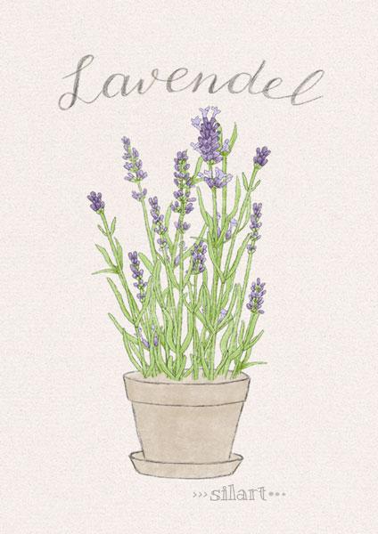 Lavendel im Topf, Zeichnung, Illustration