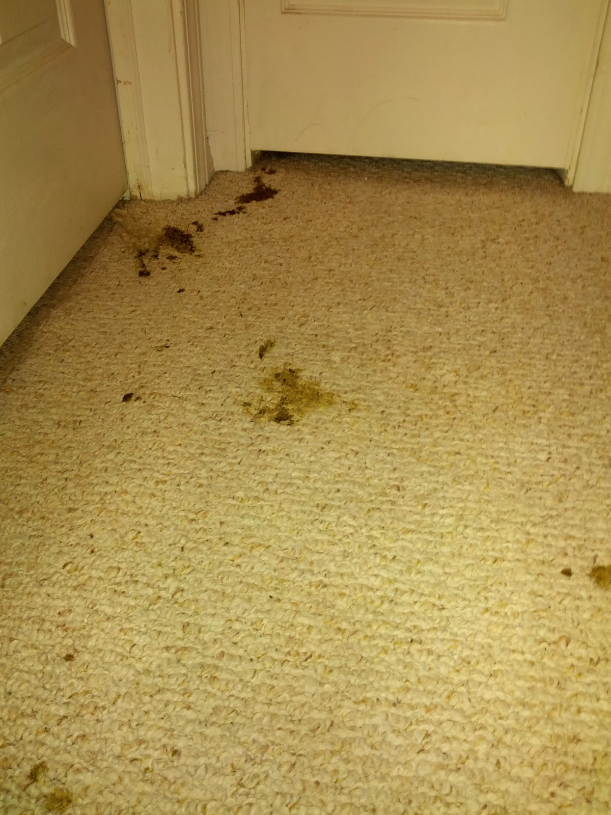 A Dog And His Mom How To Clean Up Puppy Diarrhea Out Of