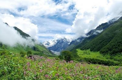 Долината на цветята е Национален парк в Индия