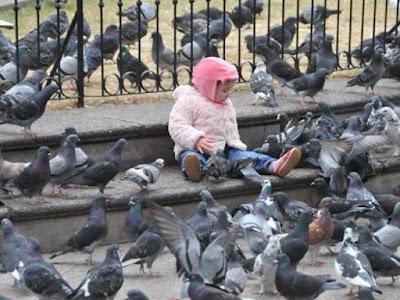 Enfermedades que provocan palomas