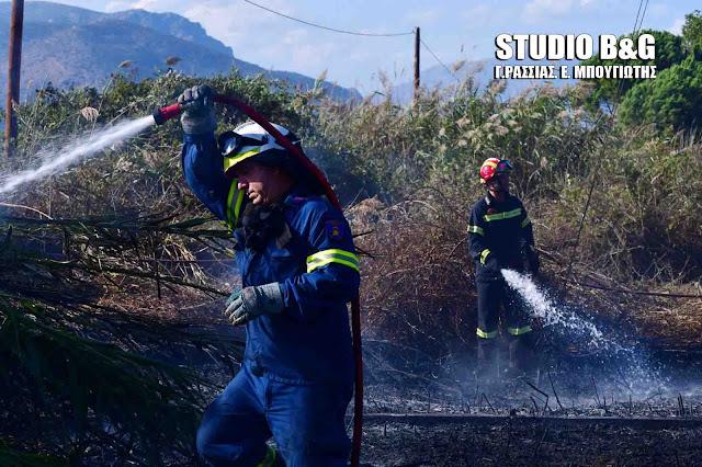 Πυρκαγιά στην περιοχή της Προσύμνης στην Αργολίδα