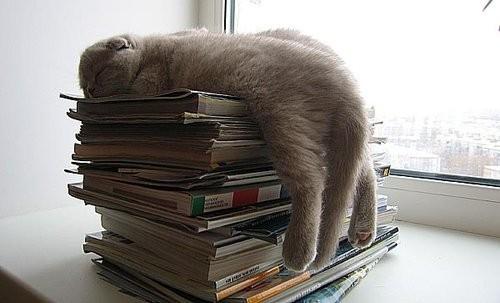 Kucing tidur lucu di atas buku
