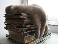 "Kucing Kucing Ini Sepertinya ""Rusak"", Mereka Tidur Sembarangan, Bikin Ngakak"