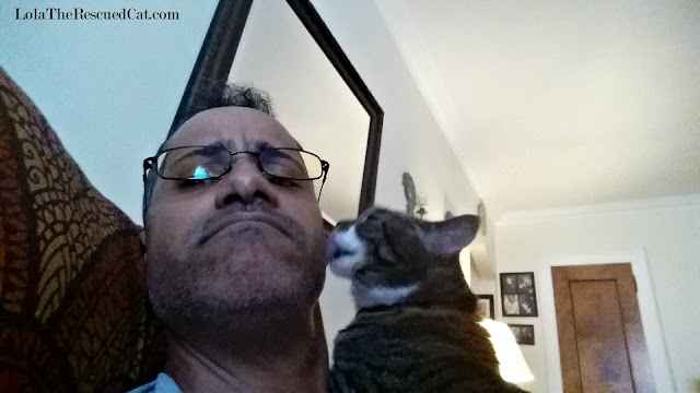 tabby cat kissing