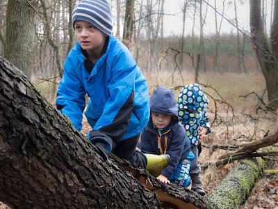 Puszcza Niepołomicka, zabawa w lesie